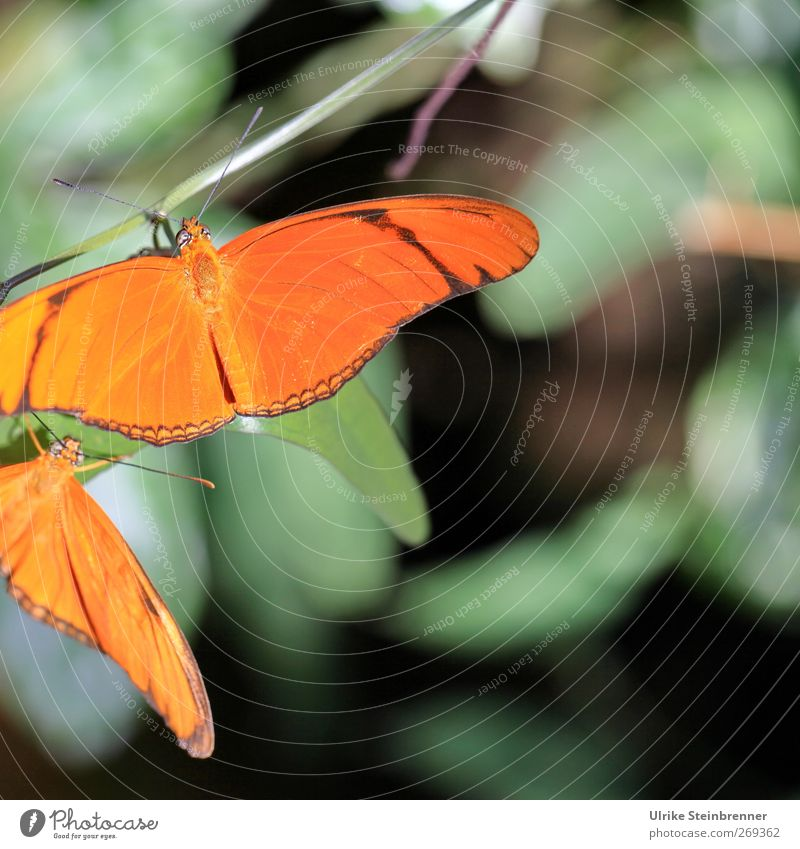 Beautiful Animal Friendship Orange Together Pair of animals Wild animal Sit Wait Esthetic Illuminate Wing To hold on Butterfly Zoo Attachment
