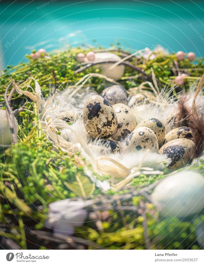 Eaester Quail Eggs on hay Sky Nature Healthy Eating Blue Beautiful Landscape Sun Animal Food Background picture Environment Spring Emotions