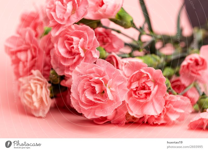 bouquet of pink carnations flowers Elegant Style Design Feasts & Celebrations Valentine's Day Wedding Birthday Art Nature Plant Flower Bouquet Fresh Natural