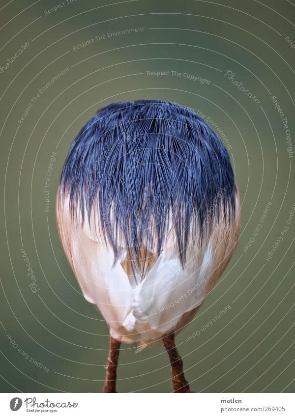 Blue White Green Animal Bird Metal coil Headless