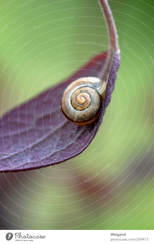 Schnick-schnack-schnuck Wellness Life Harmonious Nature Animal Snail 1 Sleep Old Positive Round Slimy Green Violet Optimism Truth Honest Authentic Speed Break