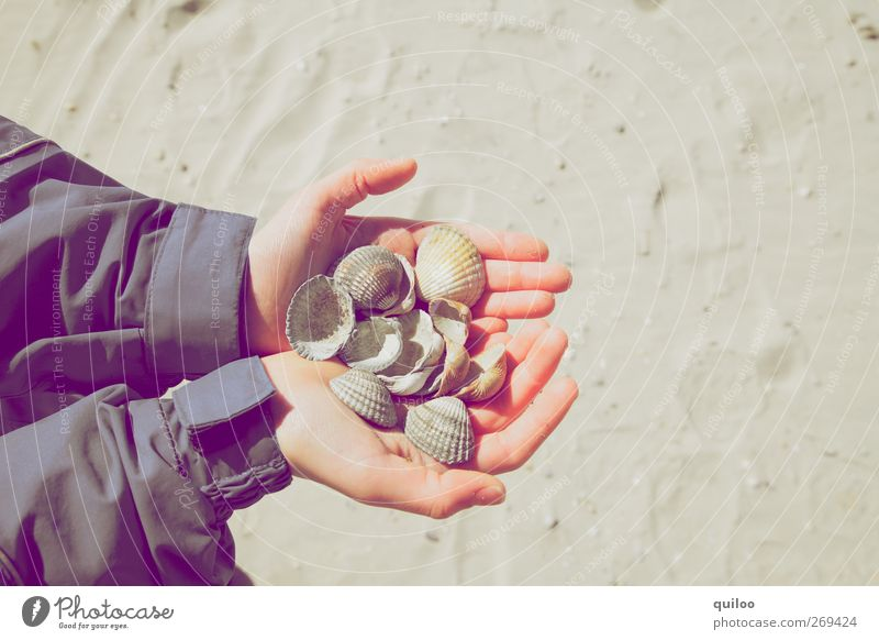 clam search Children's game Vacation & Travel Trip Summer Summer vacation Beach Arm Hand Sand Coast Mussel Playing Carrying Success Happy Small Joy Passion
