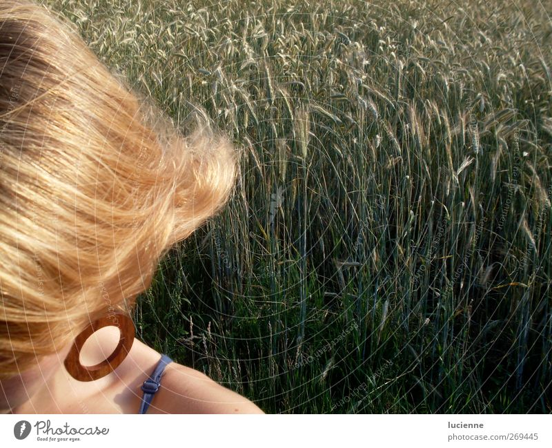rye blonde Human being Feminine Young woman Youth (Young adults) Shoulder 1 Beautiful weather Agricultural crop Rye field Field Earring Blonde Long-haired