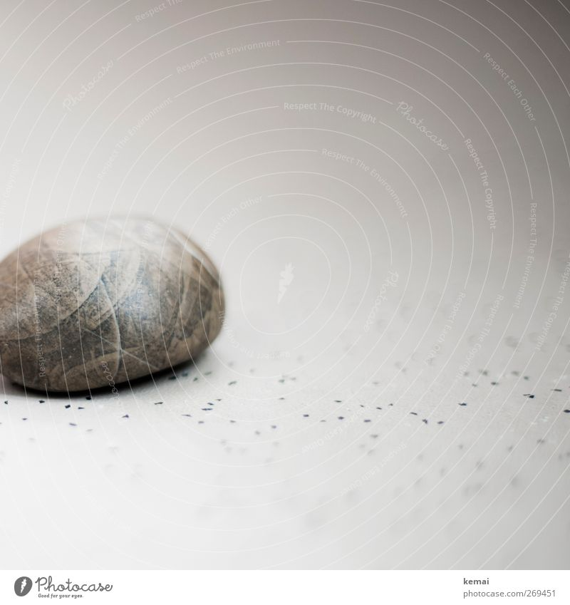 My stone Stone Point Lie Round Gray petrified Fossil Floor covering Linoleum Colour photo Subdued colour Interior shot Close-up Detail Deserted Copy Space right