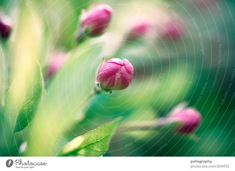 Nature Green Plant Summer Leaf Colour Environment Yellow Grass Spring Blossom Pink Closed Beginning Growth Change