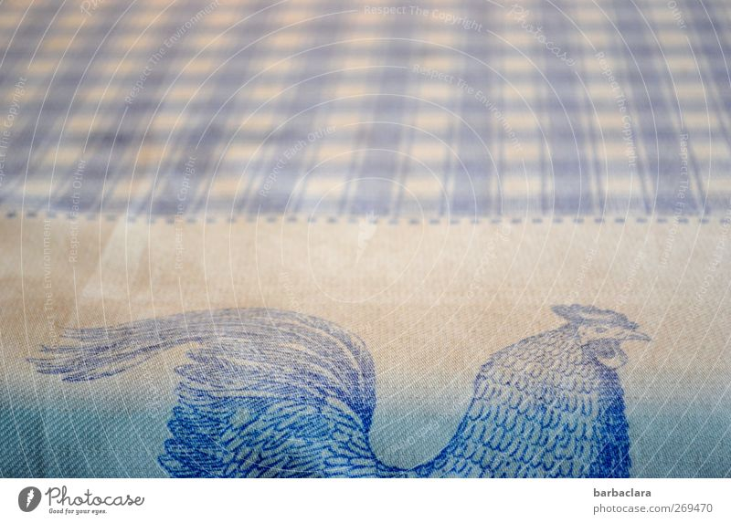 Rooster seeks hen Living or residing Arrange Table Living room Animal Decoration Tablecloth Stripe Checkered Friendliness Bright Beautiful Blue White Protection