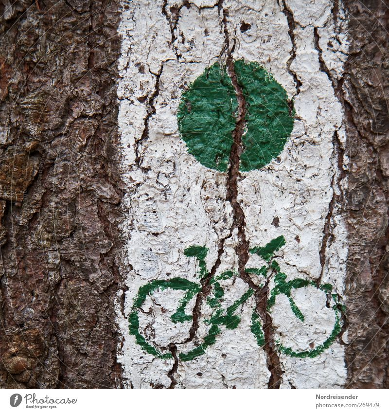 release Cycling tour Tree Traffic infrastructure Lanes & trails Sign Signs and labeling Brown Green White Mobility Pictogram Cycle path cycle Tree bark