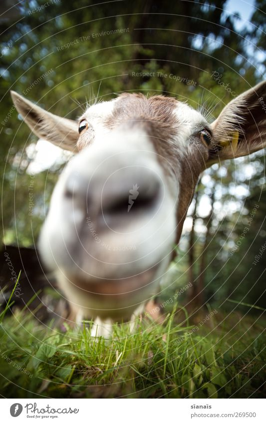 Nature Animal Grass Nose Curiosity Near Kissing Zoo Appetite Stupid Surprise Facial expression Pet To feed Odor Brash