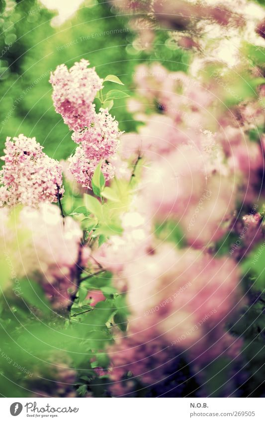 Nature Plant Leaf Environment Life Spring Garden Blossom Park Bushes Retro Transience