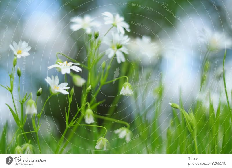 Nature Blue White Green Beautiful Plant Flower Environment Yellow Meadow Spring Small Garden Blossom Natural Fresh