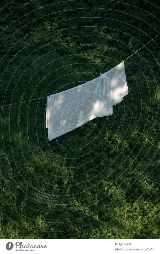 washing day Washing day Laundry Clothesline Bedclothes Grass Meadow Clean Green White Colour photo Exterior shot Deserted Copy Space top Copy Space bottom