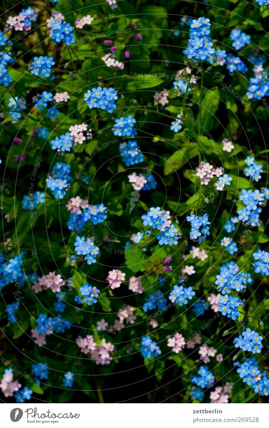 little flowers Lifestyle Leisure and hobbies Garden Environment Nature Landscape Plant Spring Summer Climate Climate change Weather Beautiful weather Flower