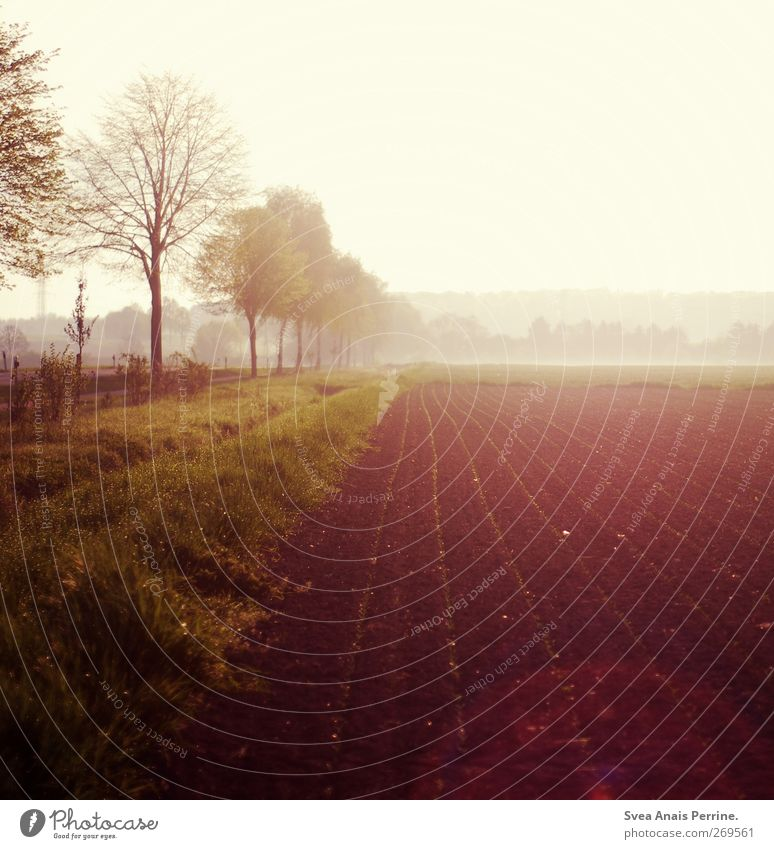 . Environment Nature Sunrise Sunset Sunlight Spring Beautiful weather Fog Tree Meadow Field Friendliness Natural Agriculture Arable land Colour photo