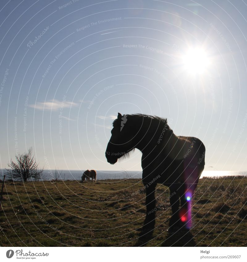 backlit Environment Nature Landscape Plant Water Sky Sun Spring Beautiful weather Grass Bushes Meadow Coast Baltic Sea Animal Farm animal Horse 2 Observe