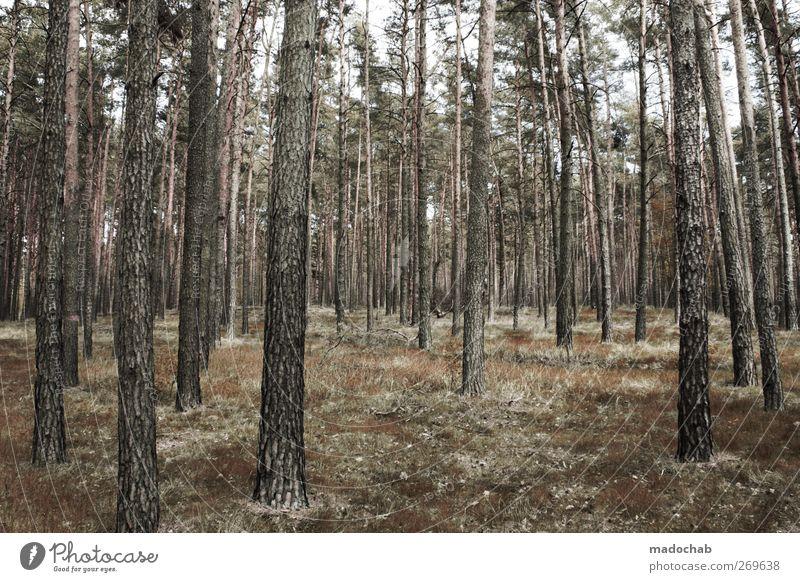 Waldemar Stumpfmann Nature Landscape Summer Tree Esthetic Power Sustainability Arrangement Growth Woodground Forest Tree trunk Birch tree Birch wood
