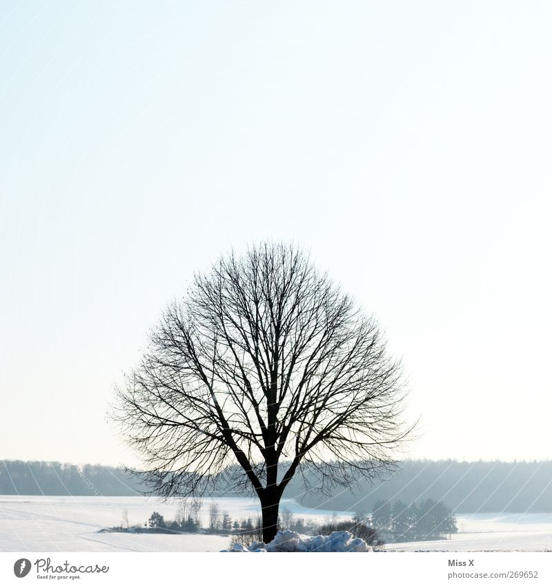 Nature White Tree Winter Loneliness Landscape Cold Snow Ice Frost Branch Twigs and branches