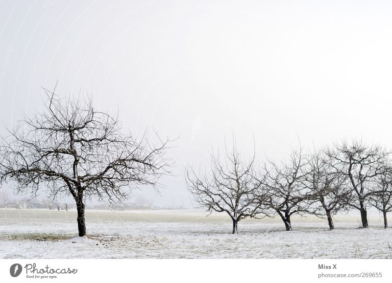 Nature White Winter Landscape Cold Snow Ice Frost Gloomy Winter's day Fruittree meadow
