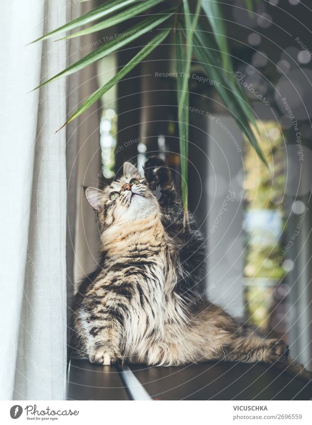 Young cat plays with houseplant Lifestyle Living or residing Animal Pet Cat 1 Design Playing Houseplant Funny Siberian cat purebred cat Flat (apartment)