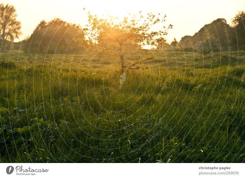 Fairytale-like little tree Environment Nature Landscape Plant Sun Sunrise Sunset Sunlight Spring Summer Autumn Beautiful weather Tree Meadow Field Fantastic