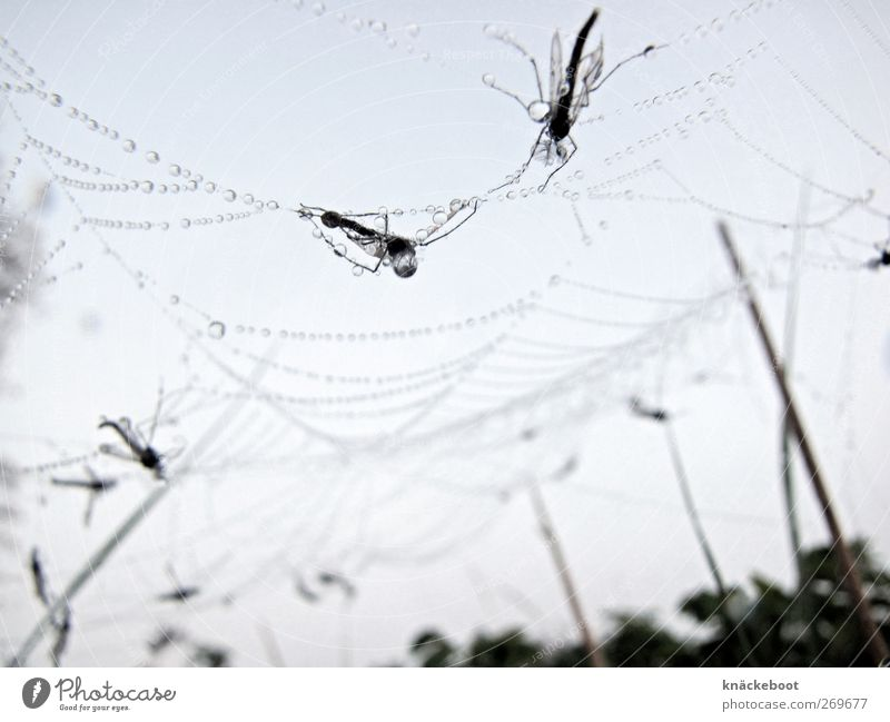 Animal Fly Drops of water Esthetic Uniqueness Bizarre Spider