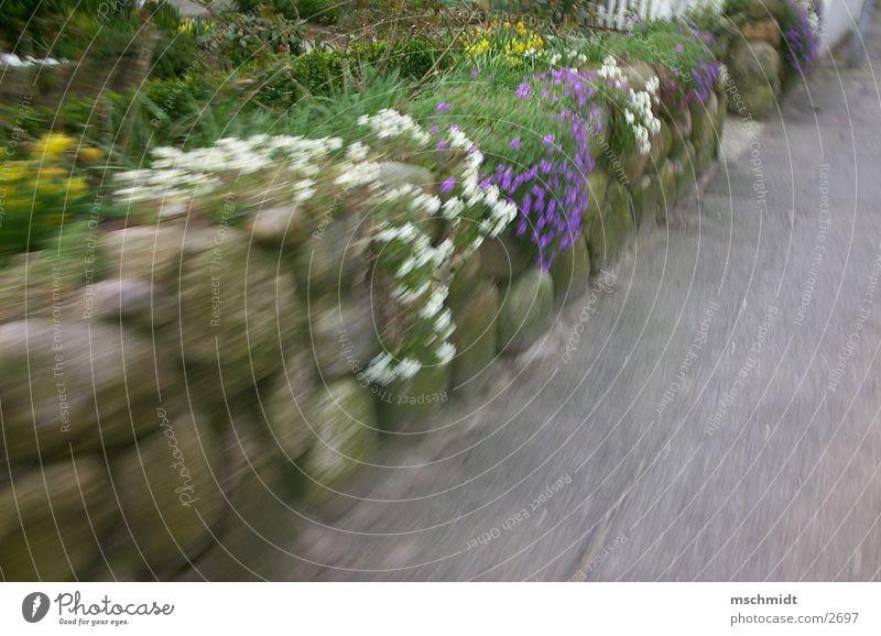 flowers on speed Flower Wall (building) Dynamics Wall (barrier)