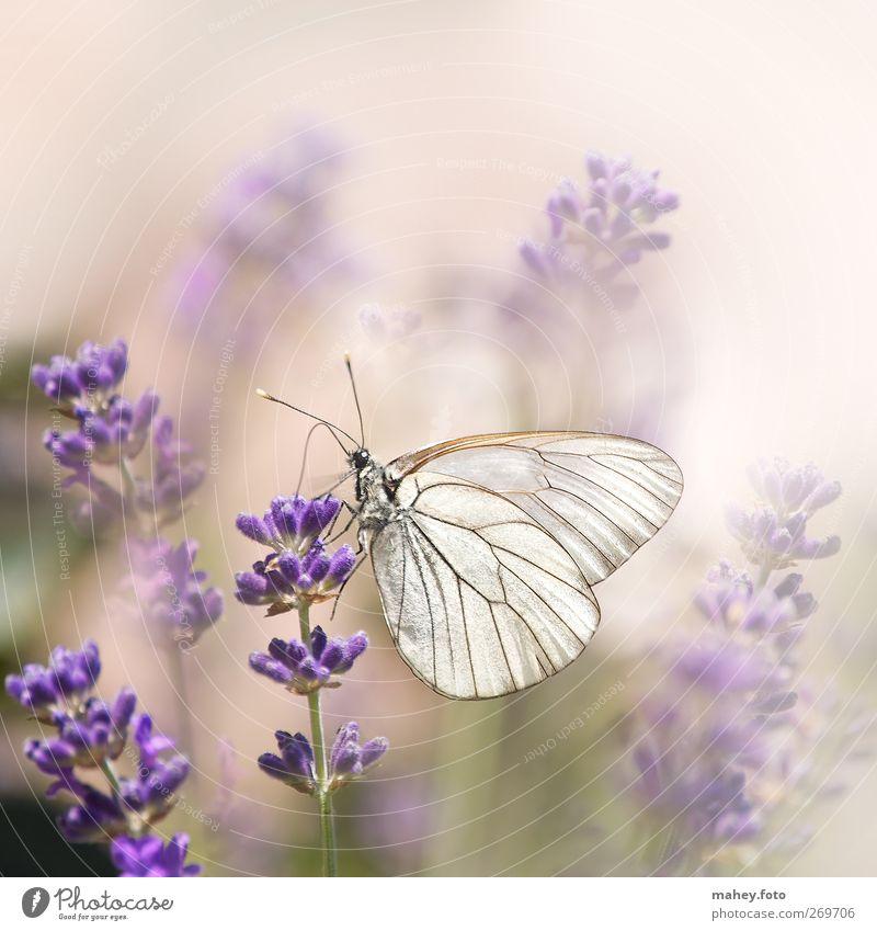 Nature White Beautiful Summer Flower Colour Calm Environment Freedom Garden Blossom Dream Bright Natural Wing Break