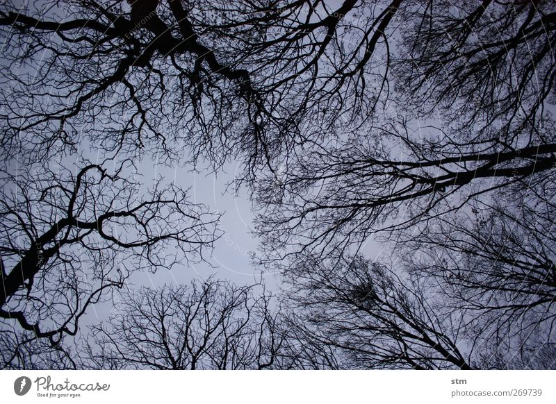 in the wood Environment Nature Landscape Plant Sky Cloudless sky Night sky Autumn Winter Beautiful weather Tree Deciduous tree Leafless Park Forest Moody