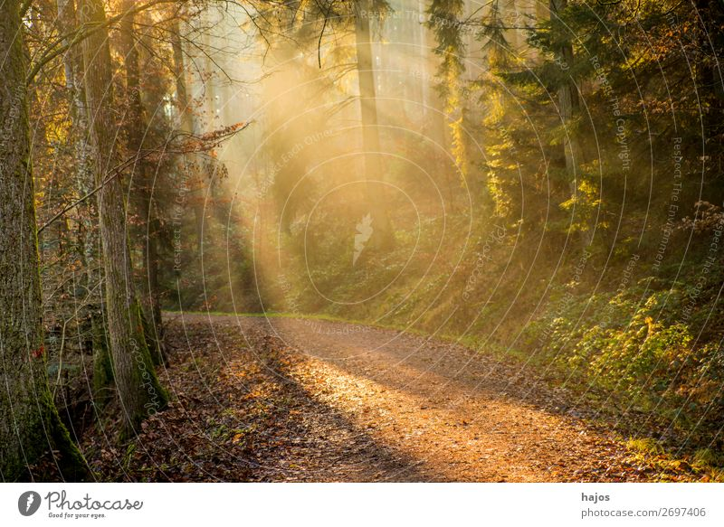Sunbeams in the forest Relaxation Winter Nature Warmth Tree Forest Bright Soft Idyll Sports Water Lanes & trails Mystic Beautiful Fantastic Autumn Romance