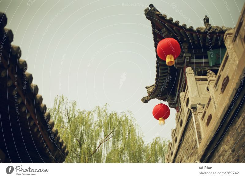 red dots Sky Cloudless sky Spring Beautiful weather Tree Foliage plant Pingyao China Village Small Town Downtown Old town Skyline Deserted