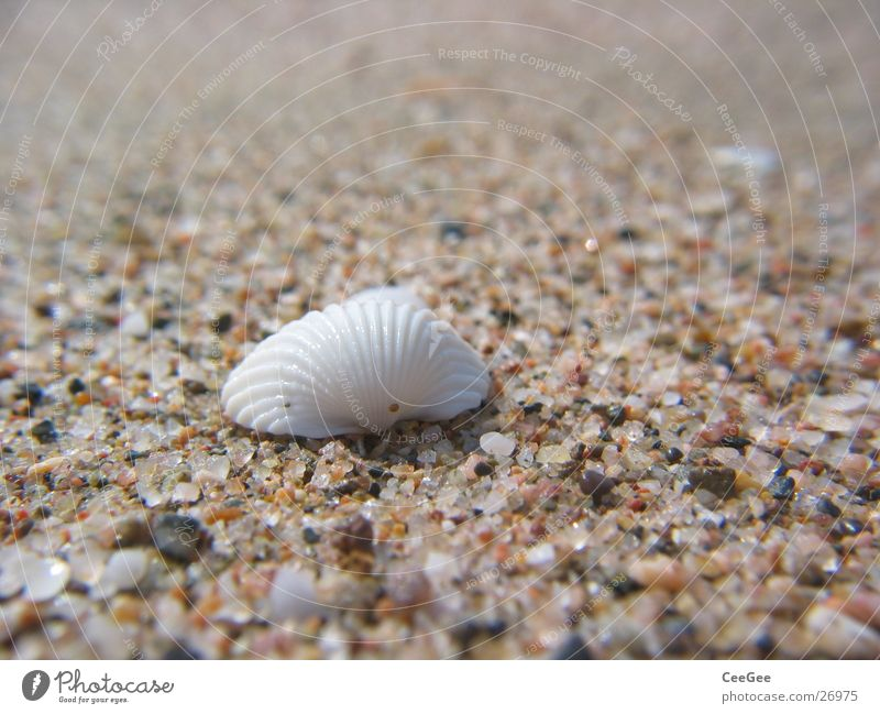 White Beach Stone Sand Spain Grain Mussel Quartz
