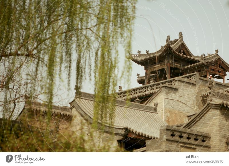 habitat Cloudless sky Spring Plant Tree Park Pingyao China Small Town Downtown Old town Skyline Populated House (Residential Structure) Hut Palace Castle