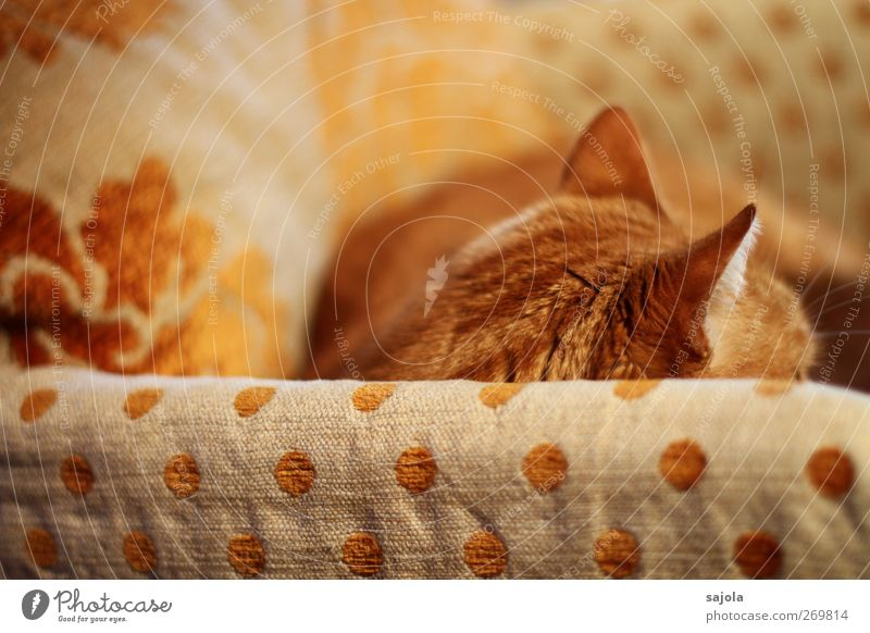 Cat Animal Calm Orange Lie Living or residing Break Chair Ear Pelt Serene Pet Cozy Harmonious Cushion Armchair