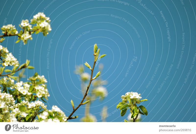Sky Nature Blue White Green Tree Sun Plant Leaf Environment Warmth Spring Garden Blossom Brown Field