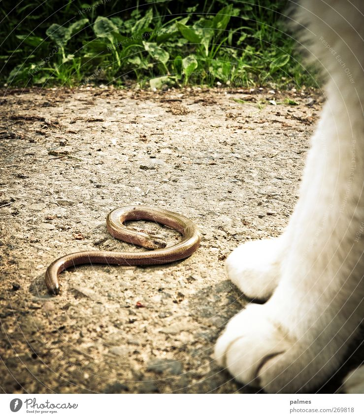 Half the aurine and the cat Animal Pet Wild animal Cat Snake 2 Bravery Animal foot Colour photo Exterior shot Day Animal portrait