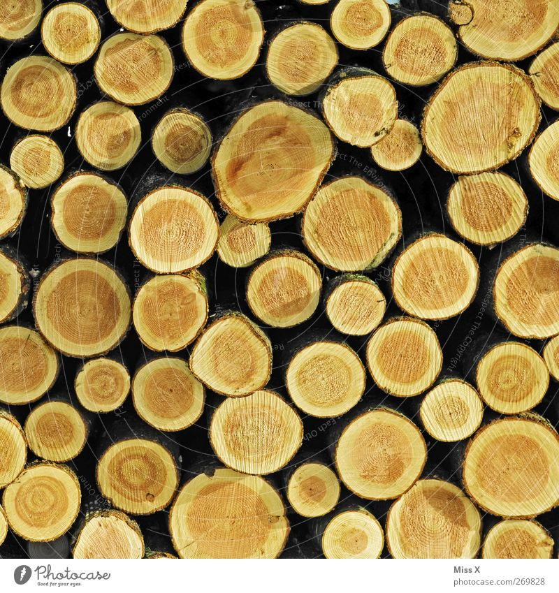 Tree Wood Brown Many Round Branch Tree trunk Twigs and branches Logging Annual ring