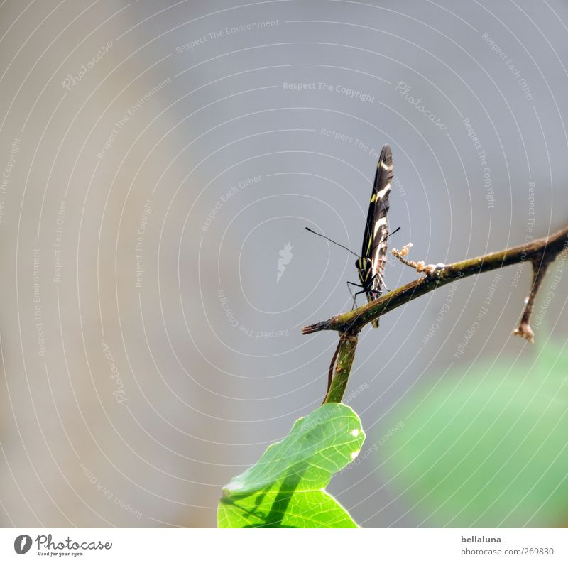 White Green Beautiful Plant Animal Leaf Black Gray Brown Wild animal Sit Exceptional Elegant Esthetic Bushes Wing