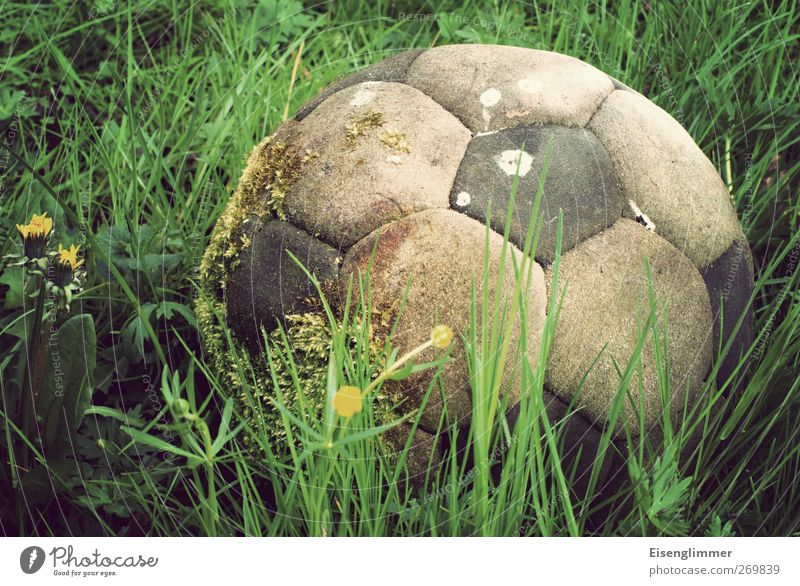 football moss Soccer Foot ball Sports Old Dirty Broken Original Whimsical Leather Meadow Meadow flower Dandelion Moss Colour photo Subdued colour Exterior shot