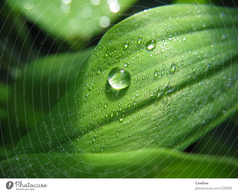 pearl Leaf Green Plant Flower Wet Damp Light Nature Close-up Macro (Extreme close-up) Water Drops of water Rope Rain Line Structures and shapes Shadow
