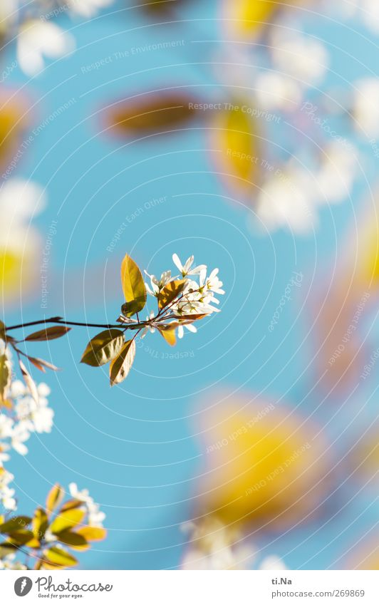 Sky Nature Tree Spring Blossom Bright Illuminate Bushes Beautiful weather Blossoming Fragrance Cloudless sky Spring fever