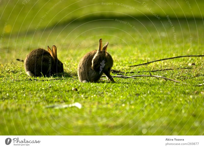 Nature Green Summer Animal Environment Meadow Grass Spring Wood Brown Together Natural Wild animal Idyll Cleaning Branch