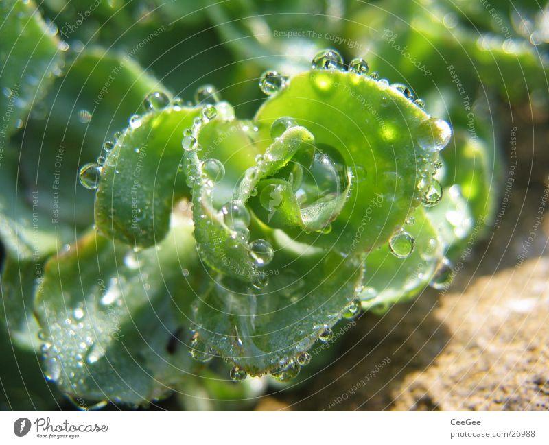 Nature Water Green Plant Rain Drops of water Wet Rope Damp Beaded