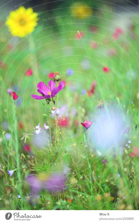 flower meadow Nature Plant Spring Summer Flower Blossom Garden Meadow Blossoming Fragrance Multicoloured Flower meadow Violet Colour photo Exterior shot