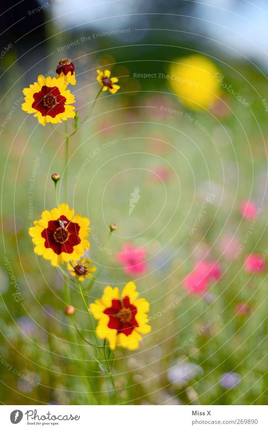 flower meadow Nature Plant Spring Summer Flower Blossom Garden Meadow Blossoming Fragrance Flower meadow Colour photo Multicoloured Exterior shot Close-up