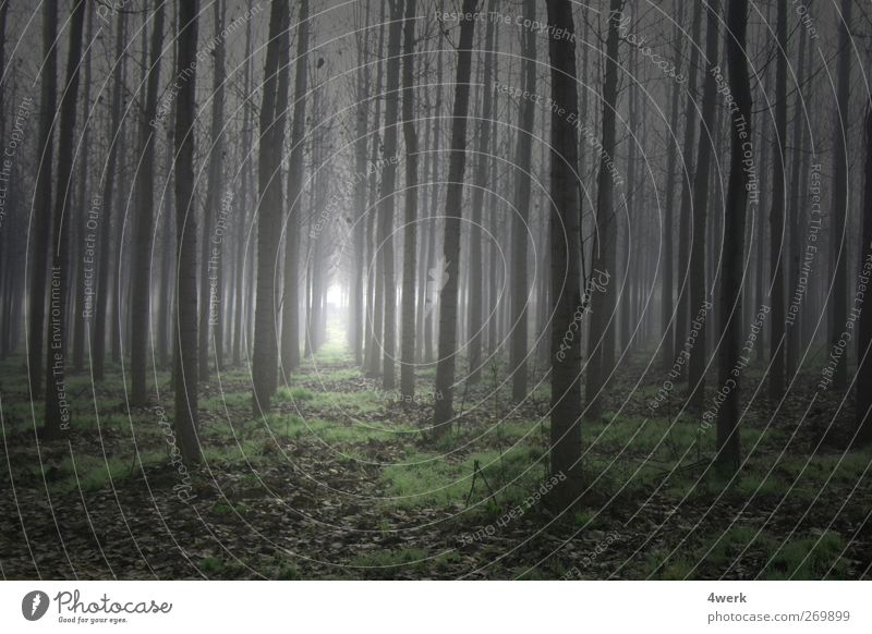 magic forest Landscape Spring Fog Tree Forest Deserted Might Romance Longing Fear Threat Inspiration Cold Concentrate Center point Arrangement Fear of death