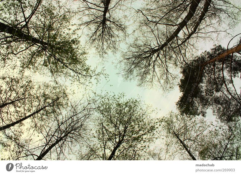 Nature Tree Landscape Forest Environment Horizon Power Idyll Esthetic Branch Uniqueness Hope Eternity Network Concentrate Bizarre