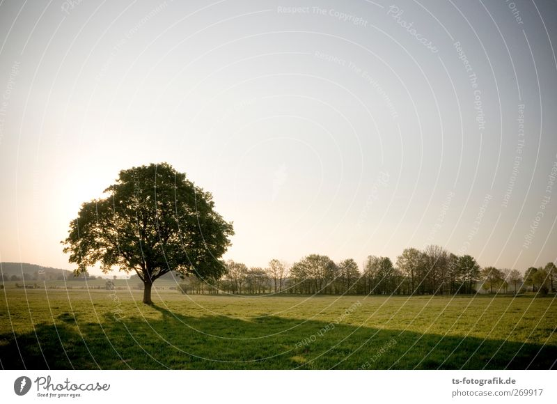 natural produce Environment Nature Landscape Sky Cloudless sky Sun Sunrise Sunset Sunlight Spring Summer Climate Beautiful weather Plant Tree Grass Treetop