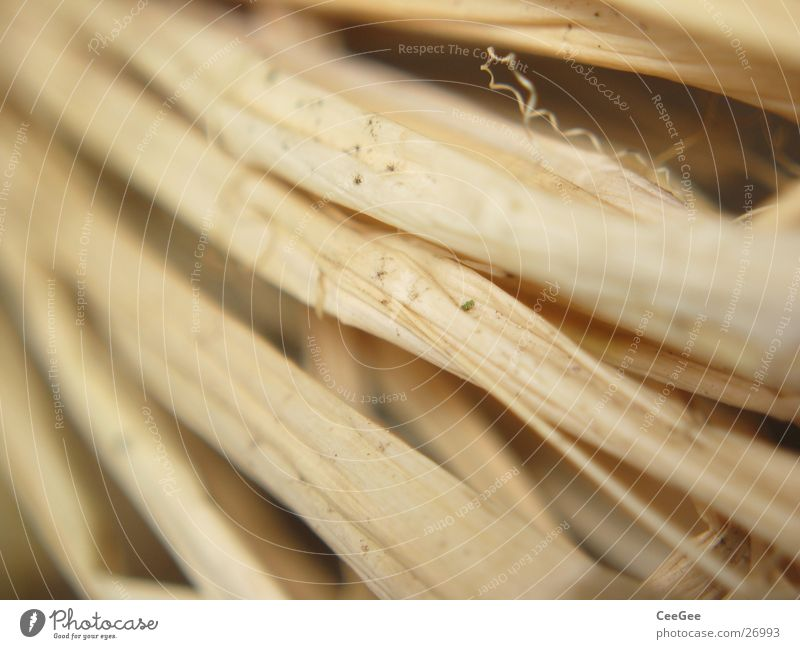 ligated Straw Thread Plaited Bound Wood Nature Macro (Extreme close-up) Close-up ochre Structures and shapes