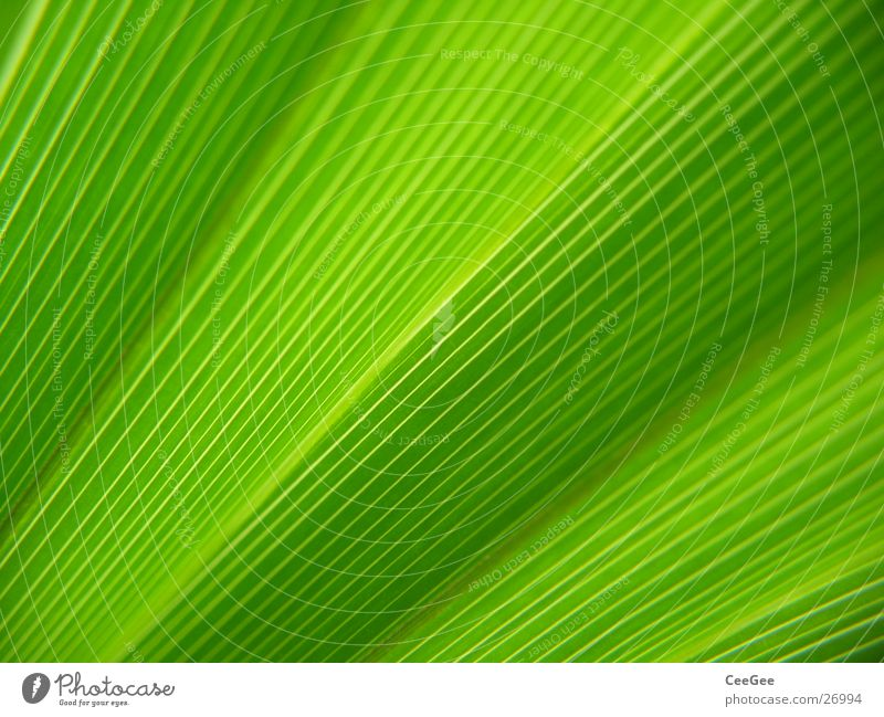 Nature Flower Green Plant Leaf Style Line