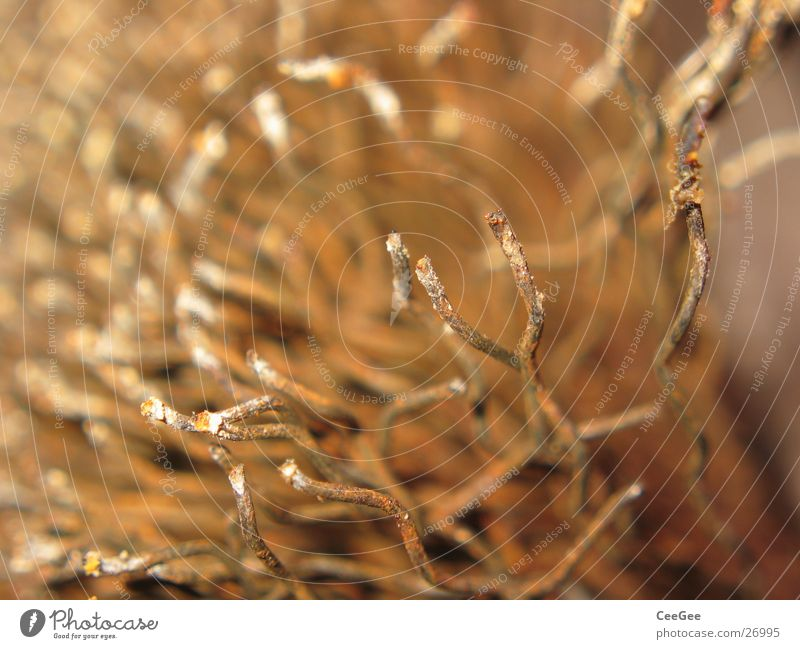 wire brush Wire Physics Tool Ochre Curved Waves Craft (trade) Brush Limbs Metal Rust Warmth Colour Macro (Extreme close-up) Close-up Detail