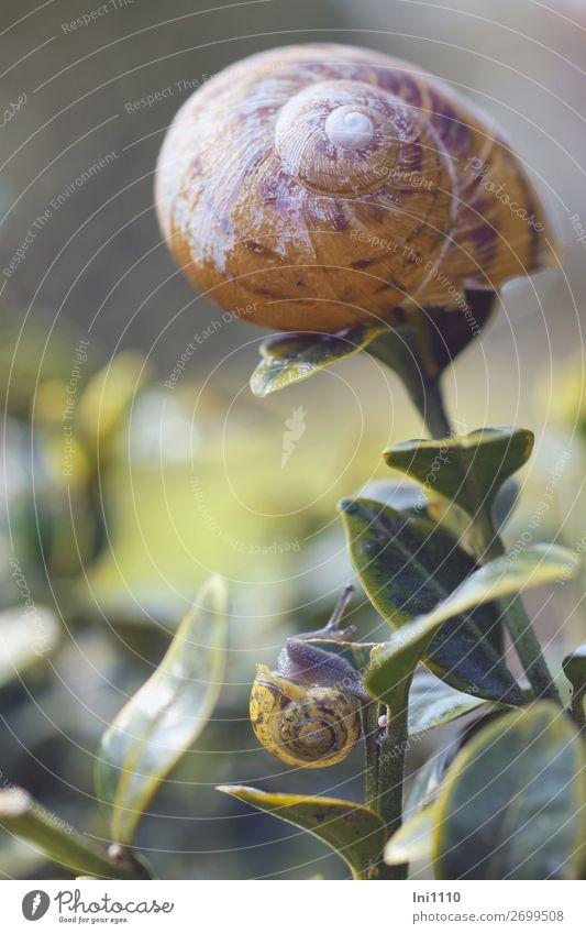 snails Wild animal Snail 2 Animal Brown Yellow Gray Green Orange White Vineyard snail Miniature Pattern Crumpet Small Large Box tree Crawl Encounter Growth